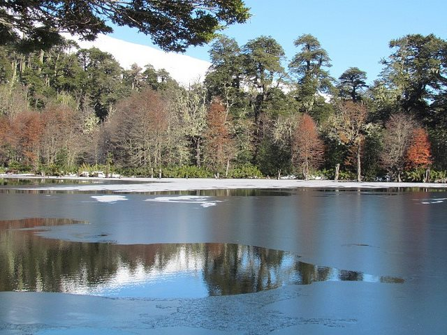 Laguna Captren: Laguna Captren, Conguillio NP - © Copyright Flickr user Pato Novoa