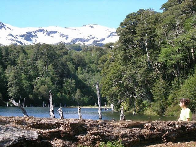 Chile Patagonia: Conguillio NP, Laguna Captren, Laguna Captren, Conguillio NP, Walkopedia