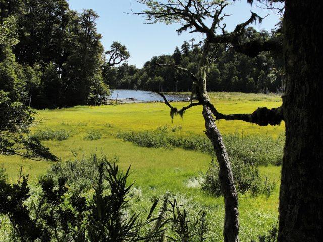 Laguna Captren, Conguillio NP - © Copyright Flickr user JavierPsilocybin