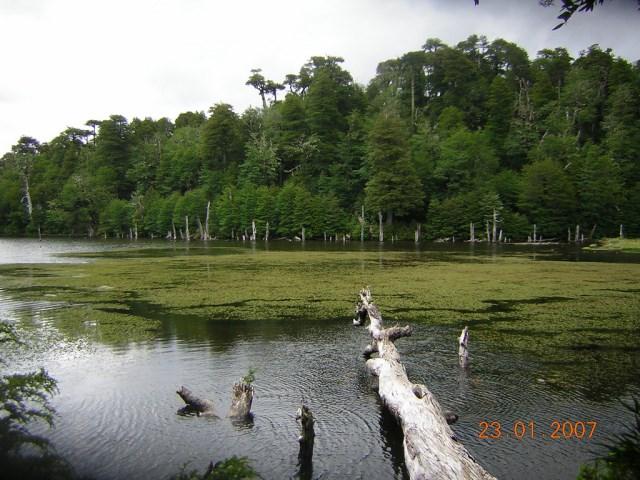 Laguna Captren, Conguillio NP - © Copyright Flickr user rgomez74